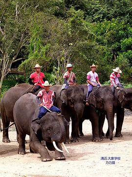 清道大象训练中心旅游景点攻略图