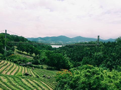 东部华侨城茶溪谷的图片