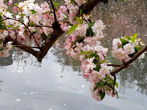 南庭海棠花溪