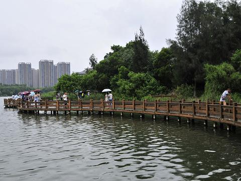 五缘湾湿地公园旅游景点图片