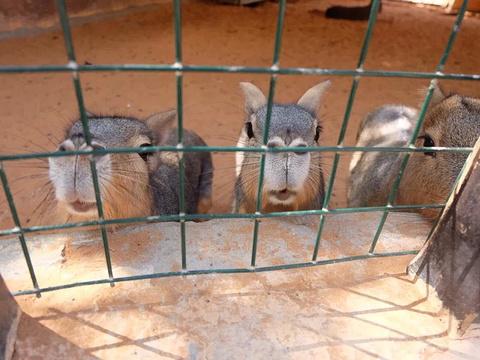 阿联酋公园动物园旅游景点图片