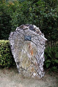 仙湖化石森林旅游景点攻略图