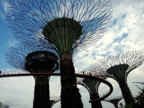 新加坡滨海湾花园旅游景点攻略图