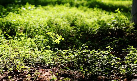 黑龙江省森林植物园旅游景点攻略图
