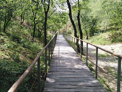 百望山森林公园旅游景点图片