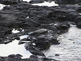 火奴鲁鲁旅游景点攻略图片