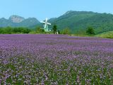 紫云旅游景点攻略图片
