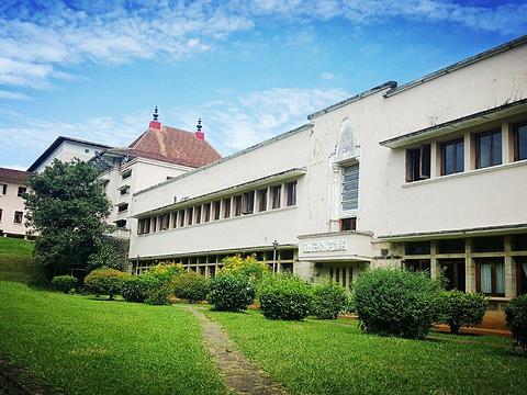 佩拉德尼亚大学旅游景点图片