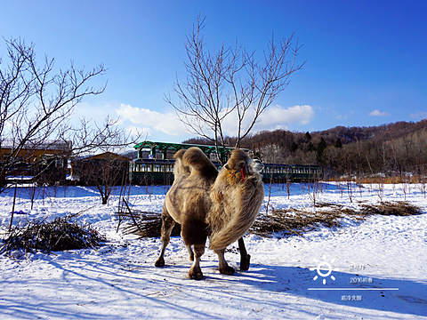 亚布力滑雪旅游度假区旅游景点图片