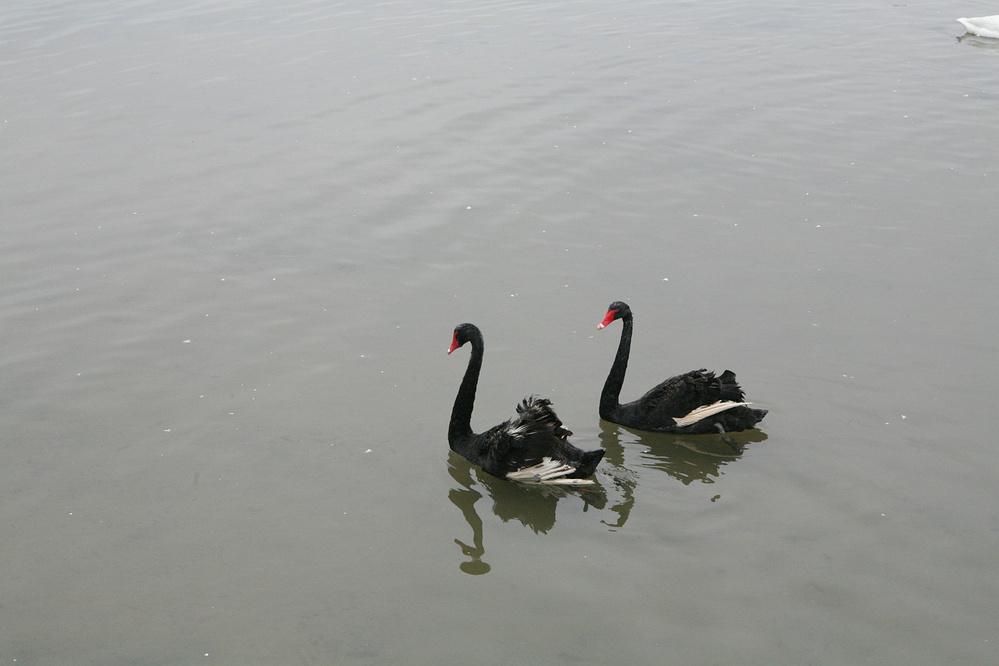 慢游天鹅湖