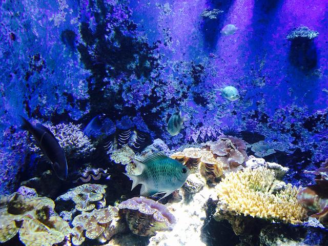 """""""美丽海水族馆虽然有点远但是真的值得..._冲绳美丽海水族馆""""的评论图片"""