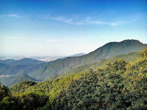 梧桐山旅游景点图片