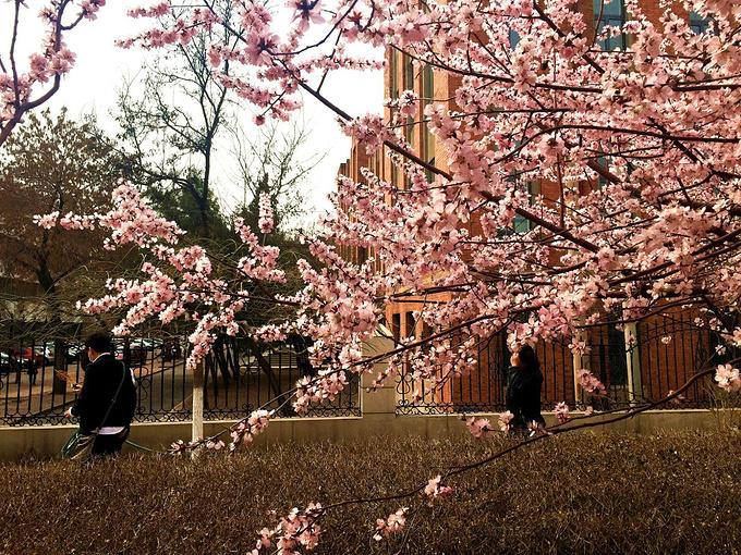 天津市桃花堤在哪_#春之女神#桃花坞的乱花渐欲迷人眼-天津旅游攻略-游记-去哪儿攻略