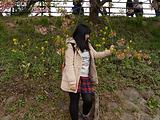 伊豆旅游景点攻略图片