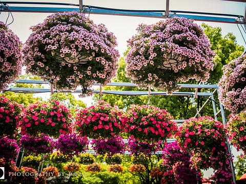上海植物园旅游景点图片