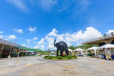 卡塔海景骑大象