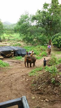 美旺大象营旅游景点攻略图