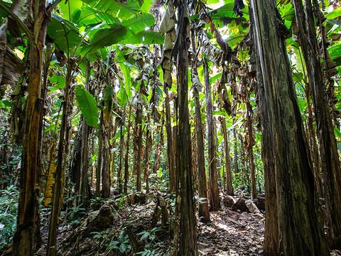 西双版纳热带雨林国家公园望天树景区旅游景点图片