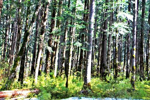 原始森林旅游景点澳门新葡亰亚洲图