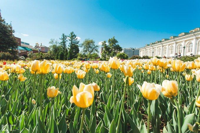 亚历山大花园图片
