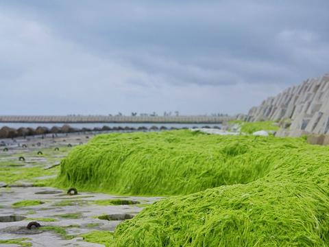 海阳连理岛旅游景点图片