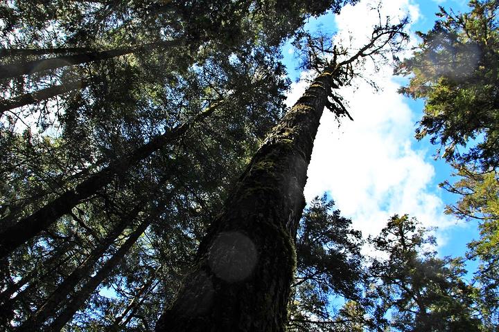 """""""可真是第一次见到这么多的参天大树,深绿深绿的,去的时候正好是早上带点阳光的时候,站在森林里的栈..._原始森林""""的评论图片"""