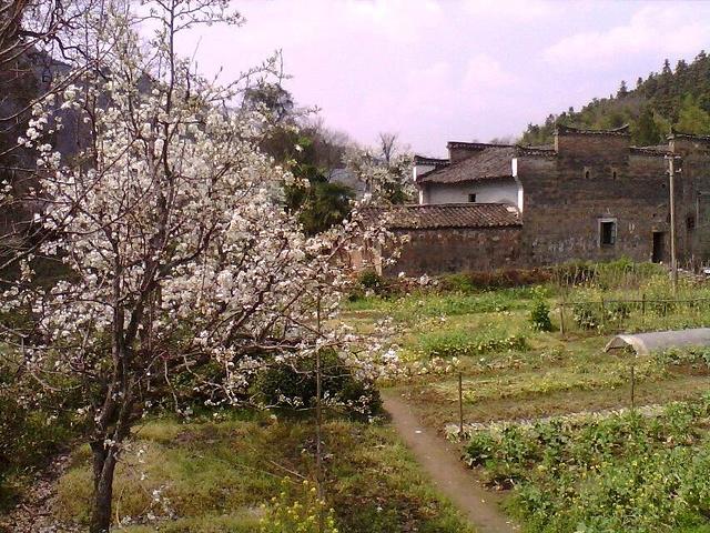 """""""但有书称她为""""中国最美丽的乡村"""",有些以偏概全,只能说是""""最美之一""""。中国风格各异的美丽乡村多的是_理坑""""的评论图片"""