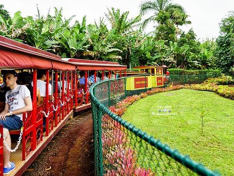 都乐菠萝种植园旅游景点图片