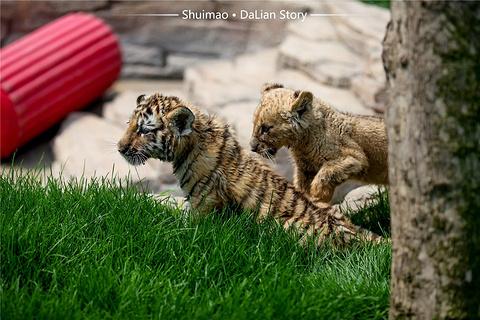 大连森林动物园的图片