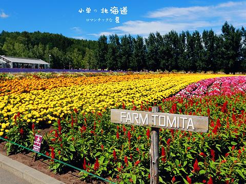 富田农场旅游景点图片