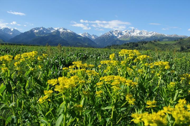 """""""但这是这成就了恰西原生态的美丽,恰西包含了伊犁所有美丽的元素,连绵的雪山、高山牧场、雪岭云杉和..._恰西森林公园""""的评论图片"""
