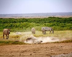 狂野非洲,丛林世界