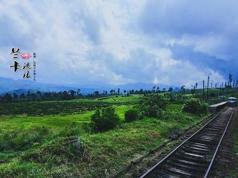 茶园火车旅游景点图片