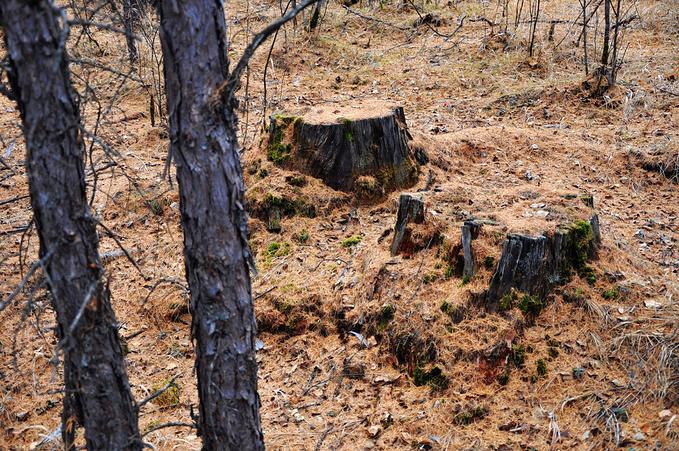 敖鲁古雅原始驯鹿部落图片