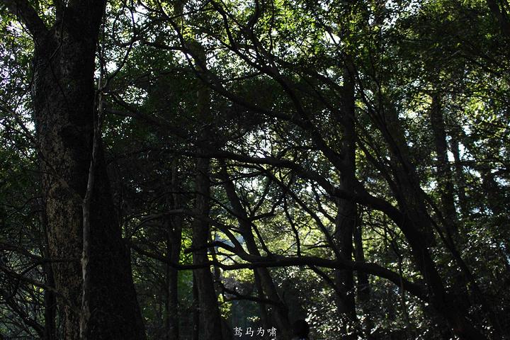 """""""包车的师傅姓詹,一路上充当了我们这次旅游的导游,第一站是离古镇最远的汪湖,也是这次行程中必游之地_汪湖生态游览区""""的评论图片"""