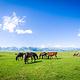 那拉提旅游风景区
