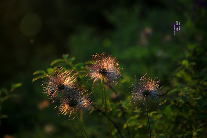 凝翠山公园图片