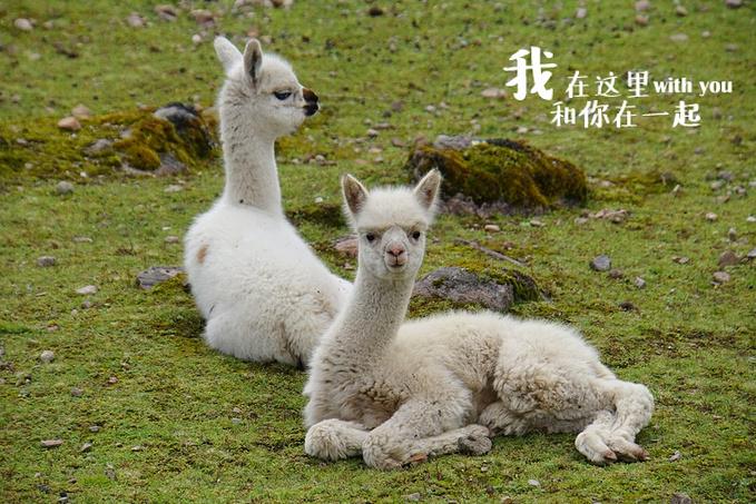 关于秘鲁图片