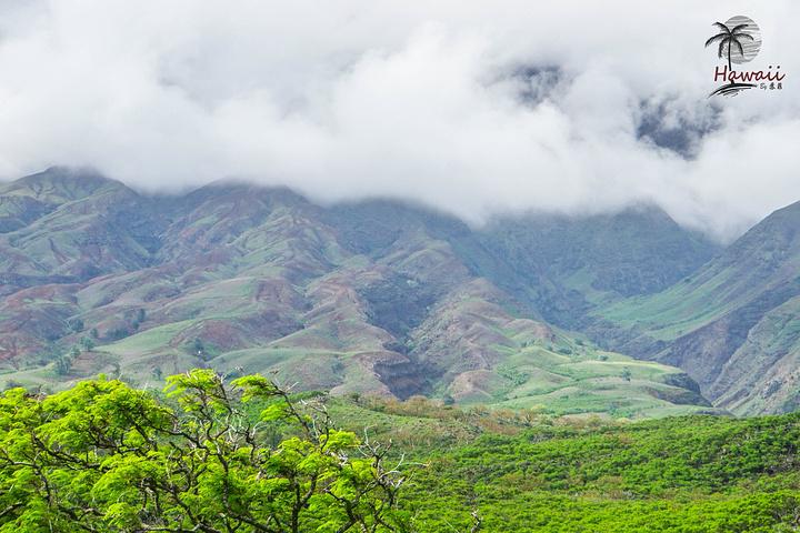 """""""由于女儿一路倒时差在车里呼呼大睡,而且我们在大岛也有专门的拜访火山国家公园的日程,所以最后选择..._哈雷阿卡拉国家公园""""的评论图片"""