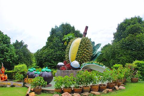 泰国热带水果园