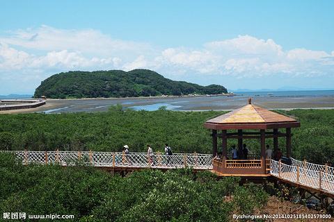 阳江海陵区红树林湿地公园