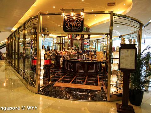 TWG Tea at Republic Plaza旅游景点图片