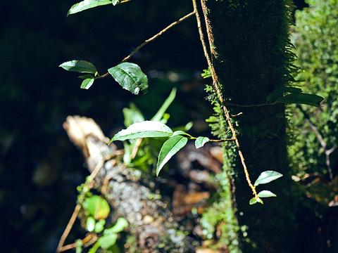高黎贡山国家级自然保护区旅游景点图片
