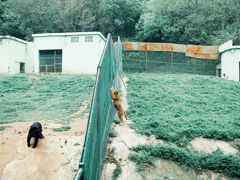 浦口珍珠泉野生动物生态园旅游景点图片