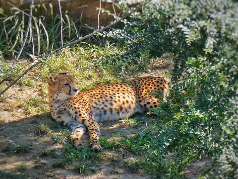 济南野生动物世界旅游景点图片