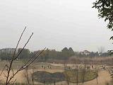 锦江白鹭湾生态湿地公园