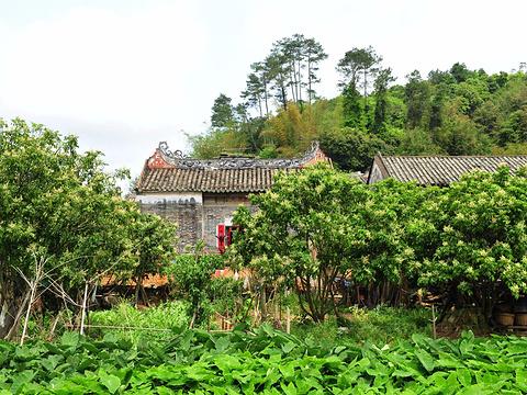 杨池古村旅游景点图片