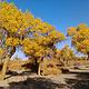 金塔沙漠森林公园