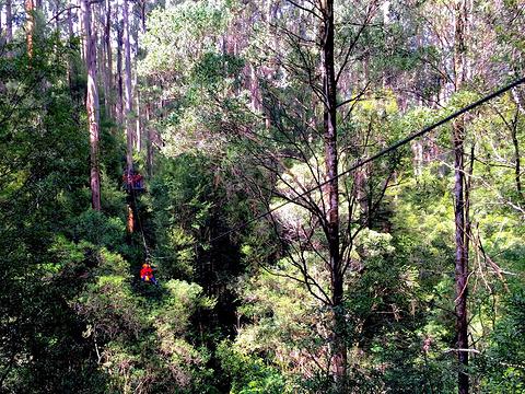 树顶漫步旅游景点图片
