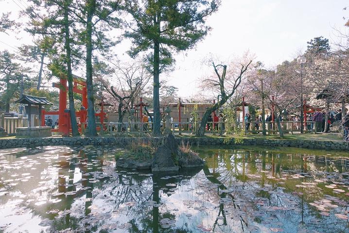 """""""在前往奈良的前一晚,看到了樱花资讯报道提..._冰室神社""""的评论图片"""